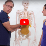 How To Strengthen Your Back – Stop Contracting Your Core!